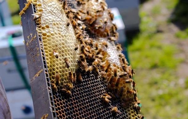 Кабмин впервые выделил дотации пчеловодам