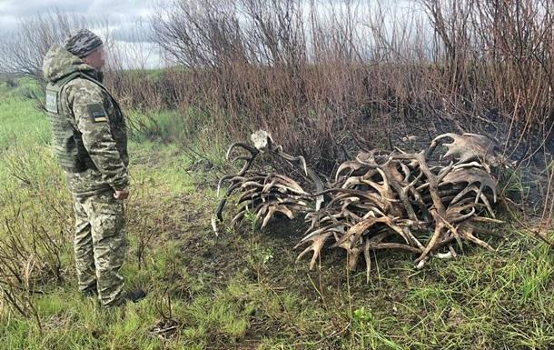 У зоні відчуження затримали порушників з рогами