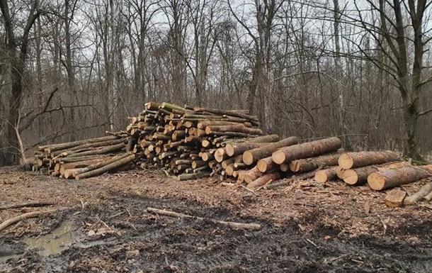 СБУ в Винницкой области задержала черных лесорубов