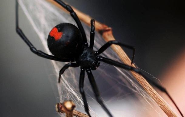 Братья дали укусить себя ядовитому пауку, чтобы стать супергероями