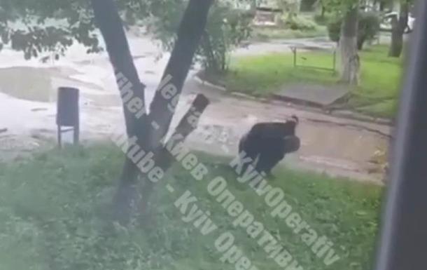 На видео попал раненый стрелок в Броварах