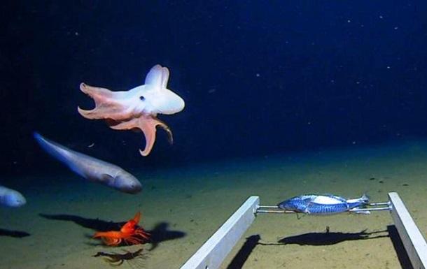 Ученые сняли осьминога на рекордной глубине: фото