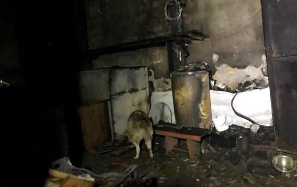 В Одессе во время пожара спасли сотни собак и котов