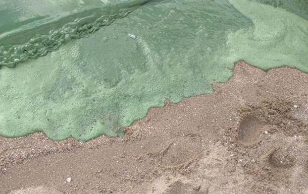 На пляжі Миколаєва вода стала отруйно-зеленою