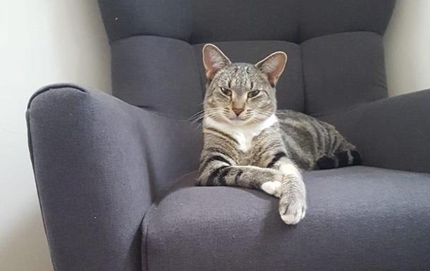 В Австралии кошка  уехала  за 1200 км от дома