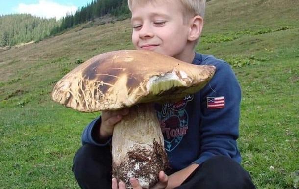На Закарпатті знайшли гриб-гігант