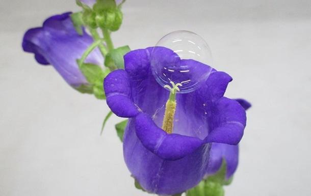 В Японии опыляют цветы мыльными пузырями
