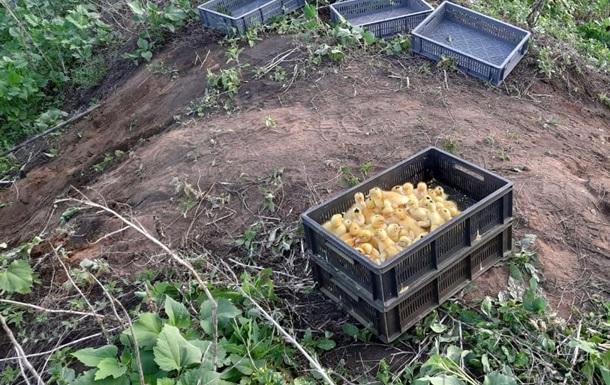 На Луганщині через дії контрабандистів загинули 400 каченят