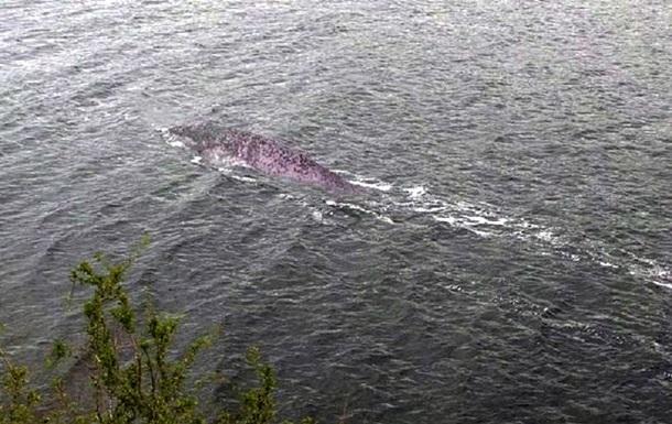 Британец снял загадочное существо в озере Лох-Несс