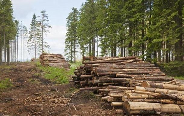 На Буковині чиновники лісгоспу організували розкрадання деревини