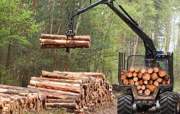 На Буковині продовжують рубати ліс
