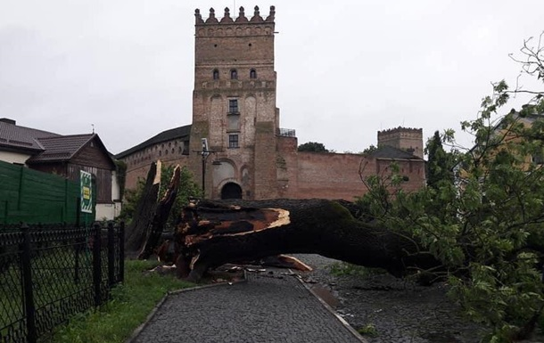 В Луцке рухнул знаменитый 200-летний Лесин ясень