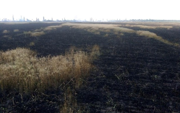 В Николаевской области выгорело поле пшеницы