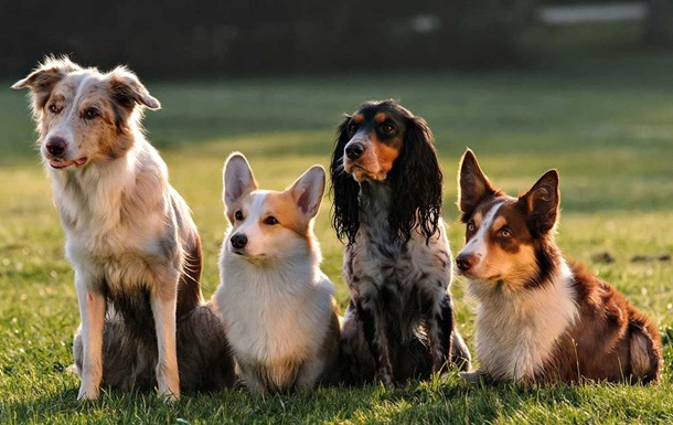 З явився новий метод перерахунку віку собак у людські роки