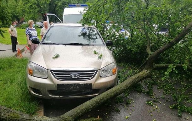 На Львівщині шквал повалив дерева, є постраждалі