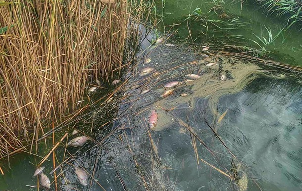 В Одесской области массово погибла рыба на водохранилище