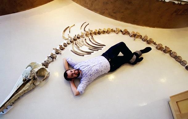 В США нашли скелет гигантского хищного дельфина