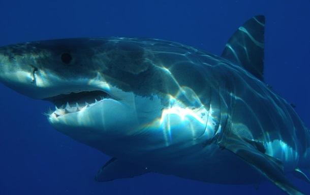 Акула атакувала човен і стягнула 10-річного хлопчика у воду