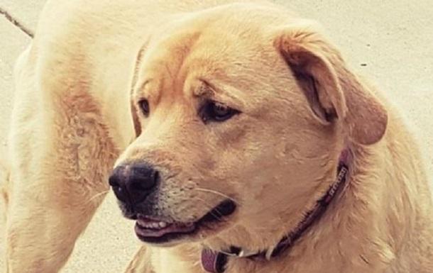 У США зниклий собака повернувся в попередню оселю господаря в іншому штаті