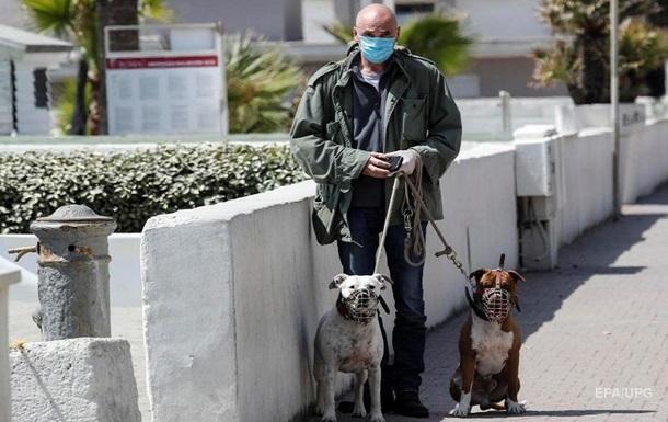 В Італії у кішок і собак виявили антитіла до COVID-19