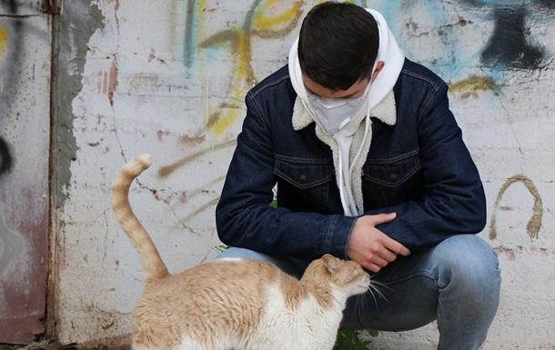 В Британии COVID-19 впервые подтвердили у кошки