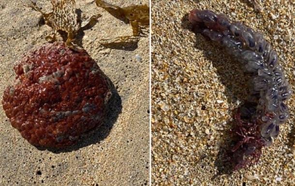 Австралійка знайшла загадкову і схожу на яйця істоту