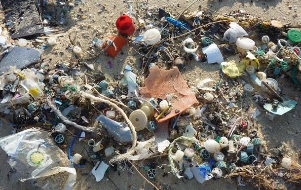 Обнаружен жук, поедающий пластик