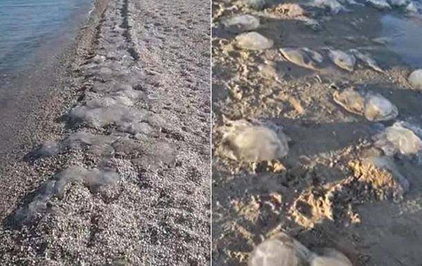 На пляжах Азовского моря снова нашествие медуз