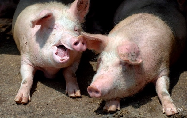 Во время пожара во Франции заживо сгорели 1,7 тысяч свиней