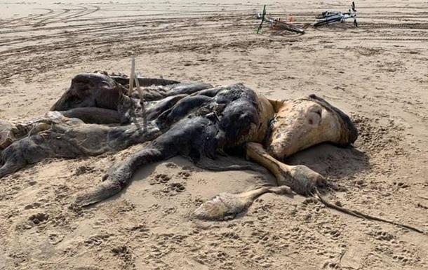 На пляже нашли 4-метровую тушу неизвестного существа