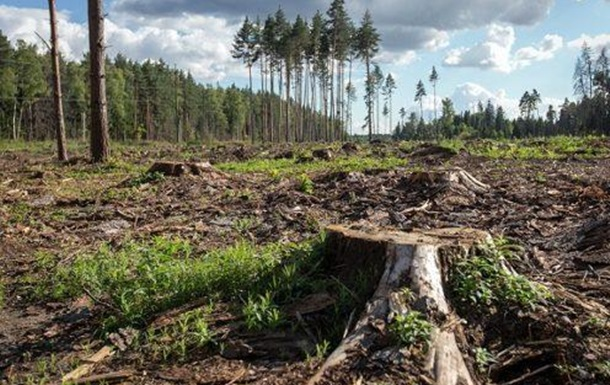 Хто знищує українські ліси?