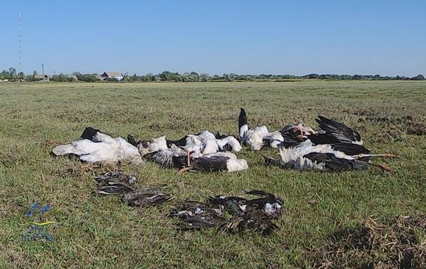 На Одесчине град убил около 300 птиц
