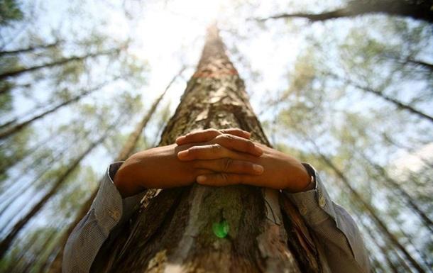Перший у світі чемпіонат з обіймів дерев відбудеться в Фінляндії
