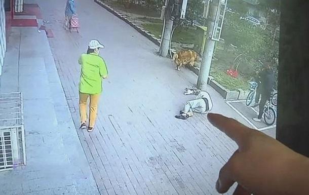 В Китае упавший с высоты кот покалечил пенсионера