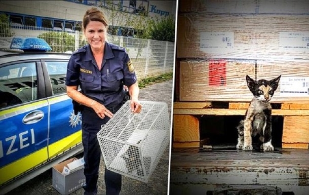 Кот проехал в опломбированном грузовике из Туниса в Германию