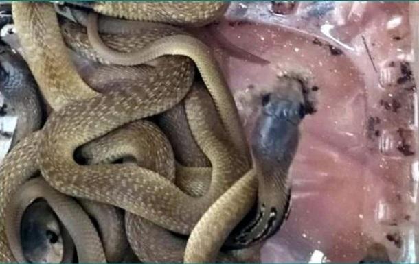 В Індії поліцейський знайшов у своїй шафі 21 дитинча кобри