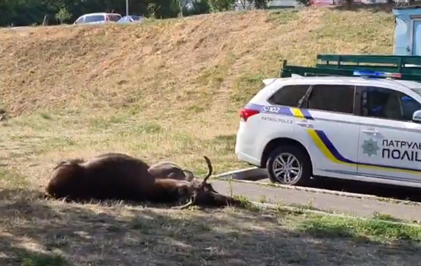 У Києві в ДТП загинув лось