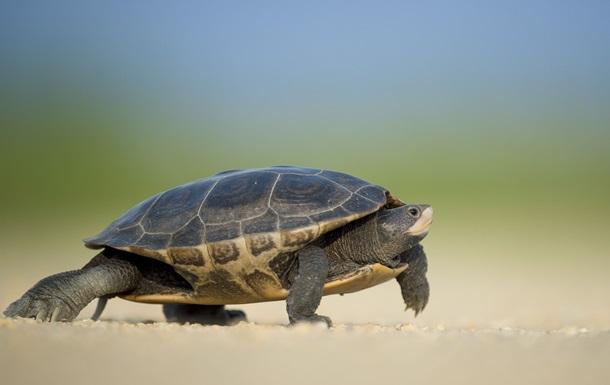 Спасение умирающей рыбы черепахой попало на видео