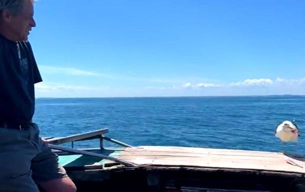 Спасенная рыбаком чайка навещала его 15 лет: фото
