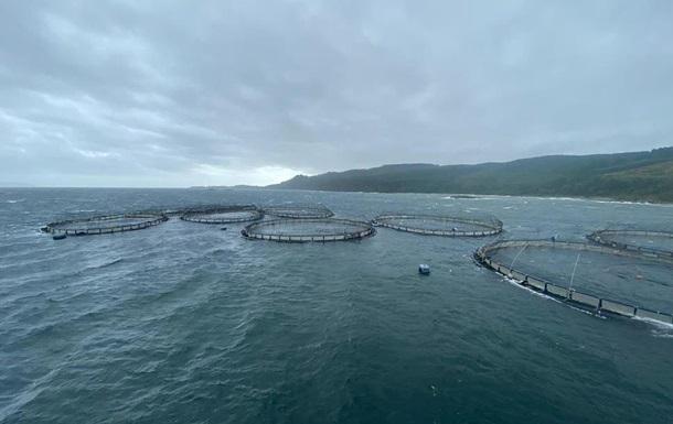 Во время шторма 50 тысяч лососей сбежали с рыбной фермы