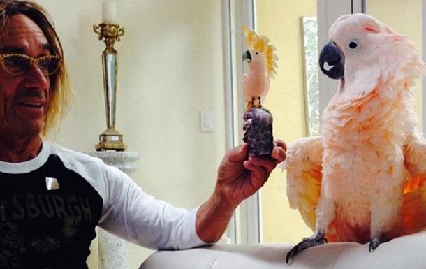 Попугай Игги Попа стал попечителем госпиталя для животных