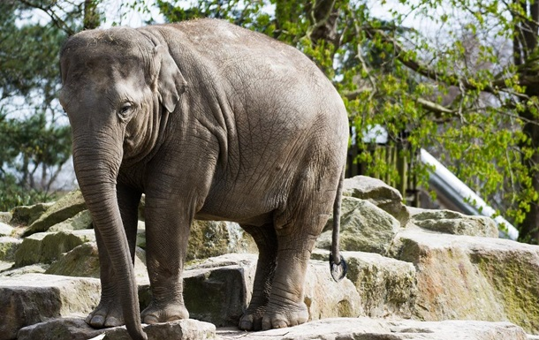 Слонов варшавского зоопарка будут лечить каннабисом