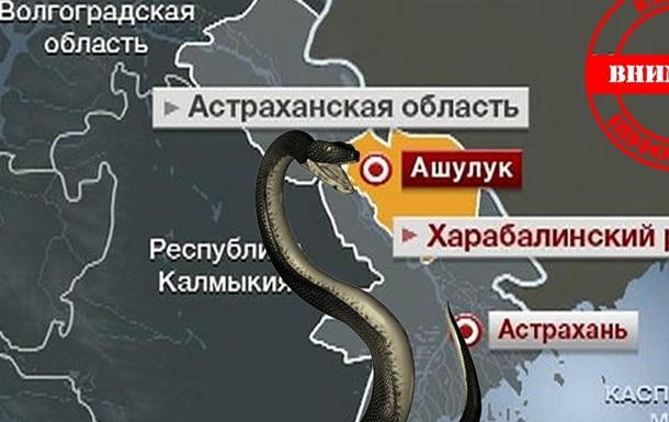 В Астраханской области нашествие ядовитых змей и пауков каракуртов