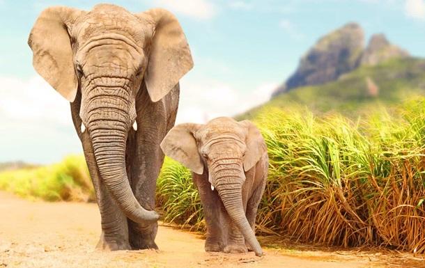 В Зимбабве загадочно погибли 11 слонов