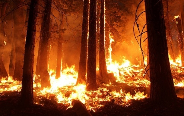 У Греції сталася пожежа в лісі