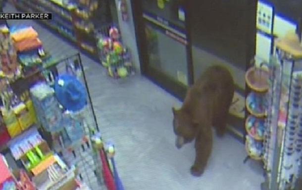 В США медведи  грабили  продуктовые магазины