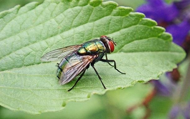 Француз підірвав будинок під час спроби вбити муху