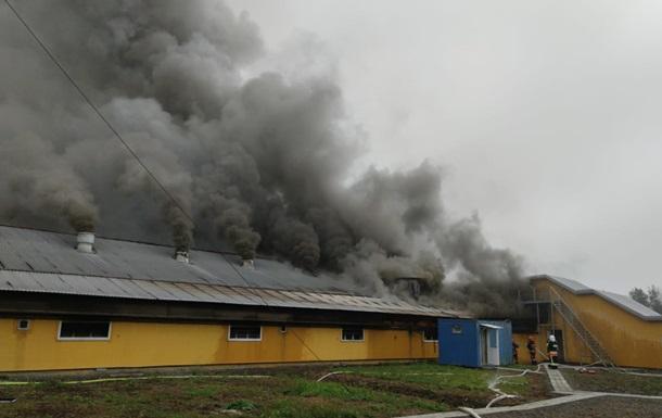 Пожежа на прикарпатській фермі знищила 2,6 тис. свиней