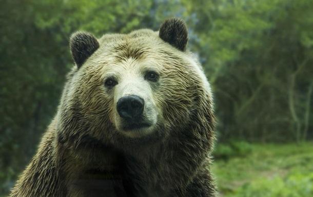 Пенсіонерка з Якутії відлякала ведмедя гарчанням