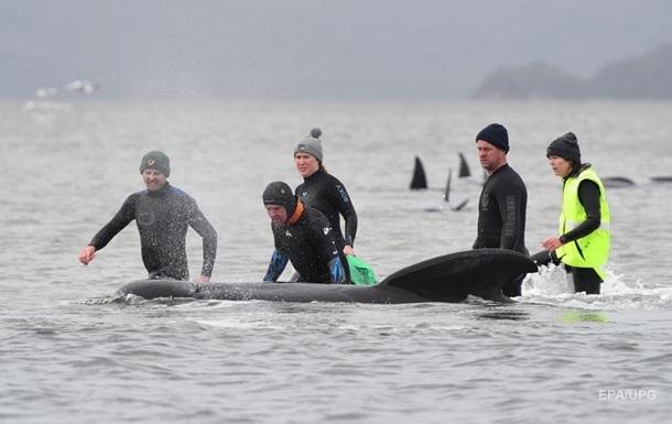 В Австралии на отмели застряли сотни китов